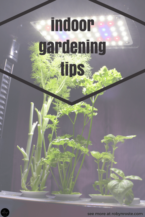 Take it from me. Growing herbs isn't as easy as the Internet tells you. So here are some indoor gardening herb tips from someone who has tried, failed, tried again, failed some more, and is now a successful herb grower. With a little help from the Internet.