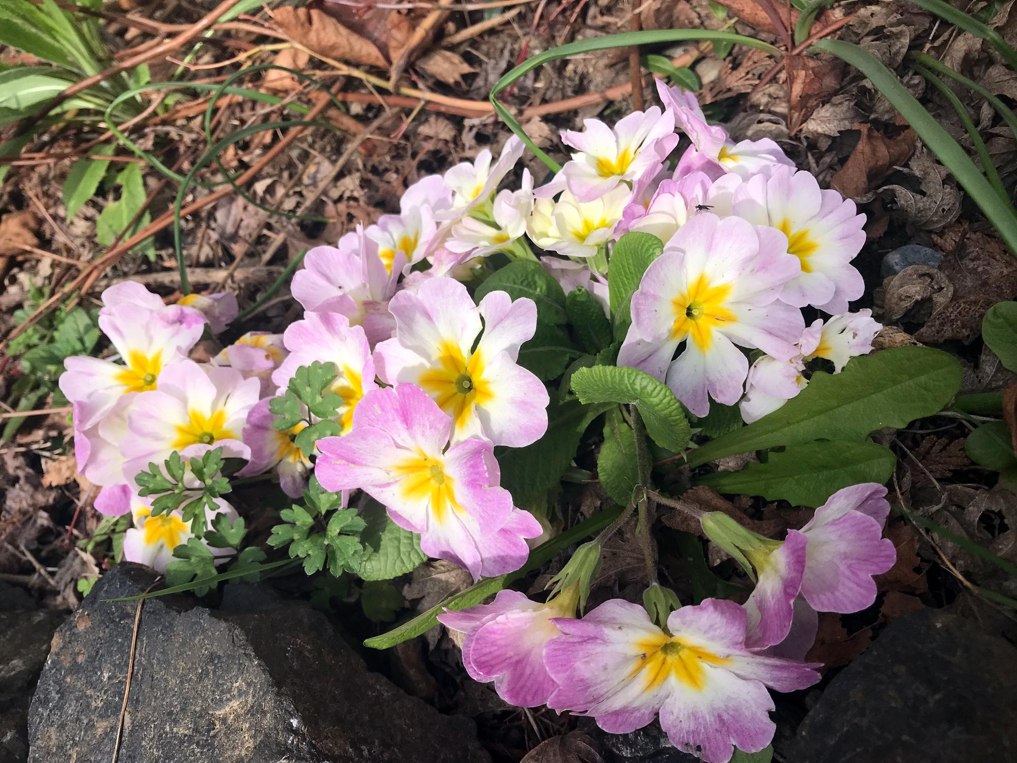 April Flowers In Season Garden
