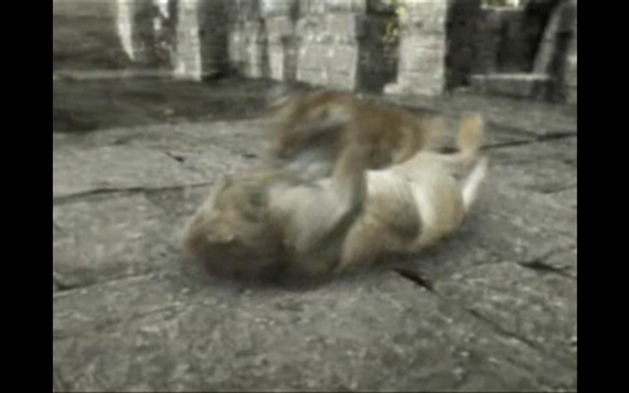 Lion vs. Tiger: Battle to the Death