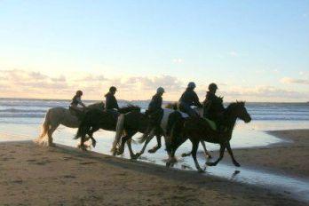 Ponies on Druidstone beach, St Brides Bay near St Davids and Solva, Pembrokeshire Coast National Park, South West Wales