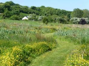 Mown path through the moor