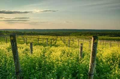 Blenheim Vineyards In Charlottesville VA Is Owned By Dave Matthews