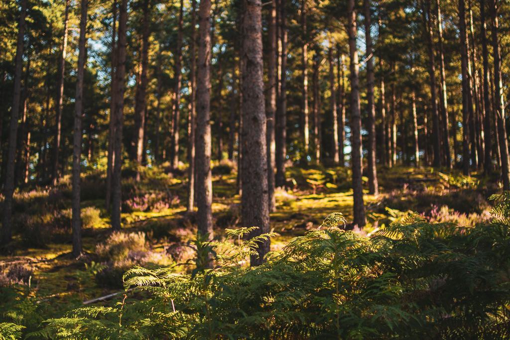 parc-national-de-cairngorms-ecosse-rockbeergasoline