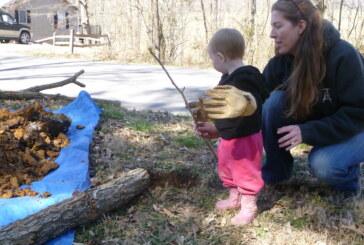 Volunteers spruce up Boxerwood