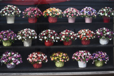 Washington state rules against florist in discrimination case