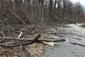 Parts of Blue Ridge Parkway remain closed while crews clear debris