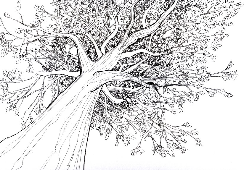 Line Art Of Tree : How to draw a d tree with pencil step by for