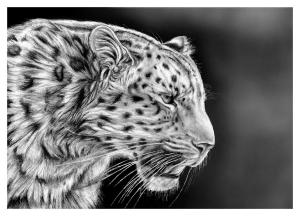 How to draw cheetah tiger