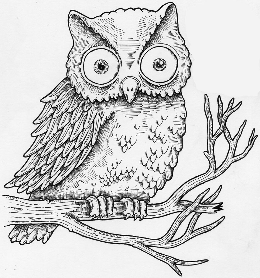 How to draw a realistic owl cartoon step by step easy for for Draw an owl in two steps