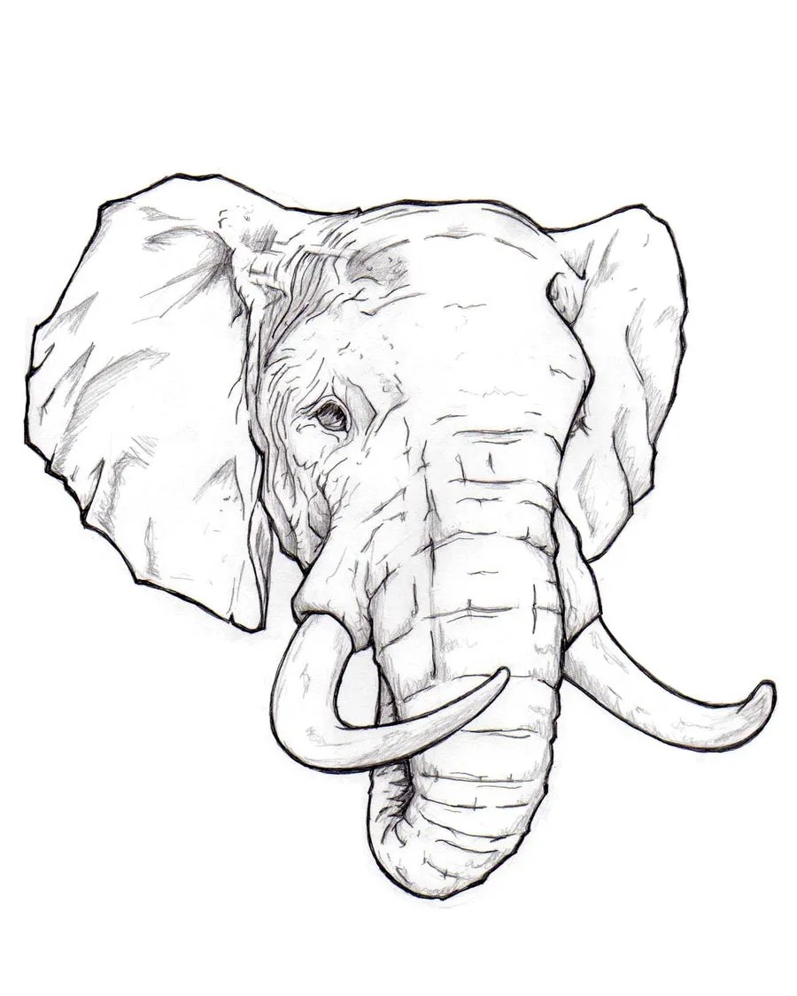 How to draw an elephant head step by step easy for beginners video tutorial