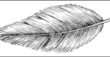 how to draw a feather