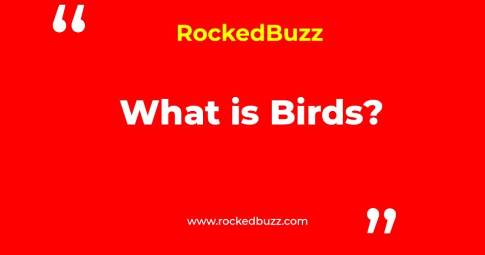 What is Birds rockedbuzz