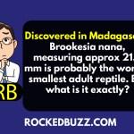 Discovered in Madagascar, Brookesia nana measur
