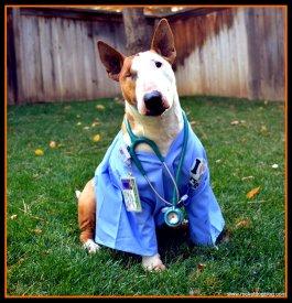 DIY Halloween Dog Costumes