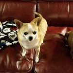 Natural Pet Odor And Stain Removal