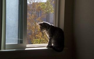 Wordless Wednesday – Solitude