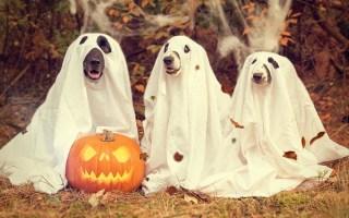 Halloween Dog Treats