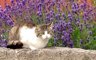 Essential Oils Cats