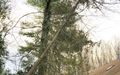 December Storm Damaged Tree