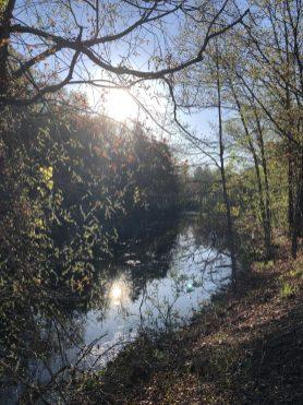 Tannery Pond Spring