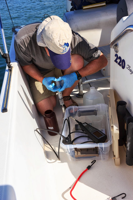 Filtering dissolved organic matter in coastal waters off Key West, FL. Photo copyright: Chris Osburn