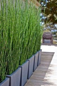 Awesome Fence With Evergreen Plants Landscaping Ideas 109