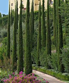 Awesome Fence With Evergreen Plants Landscaping Ideas 113