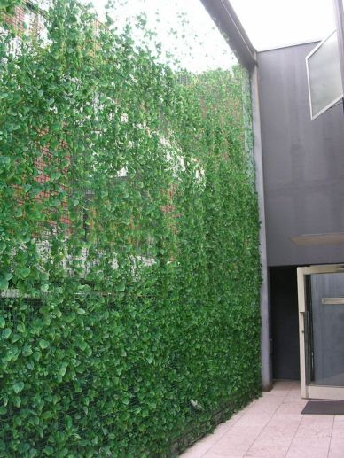 Awesome Fence With Evergreen Plants Landscaping Ideas 13