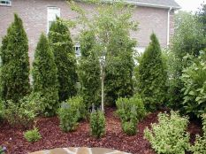 Awesome Fence With Evergreen Plants Landscaping Ideas 37