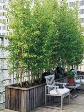 Awesome Fence With Evergreen Plants Landscaping Ideas 67