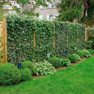 Awesome Fence With Evergreen Plants Landscaping Ideas 77