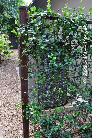 Awesome Fence With Evergreen Plants Landscaping Ideas 83