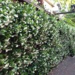 Awesome Fence With Evergreen Plants Landscaping Ideas 96
