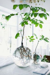 Beautiful Home Plant for Indoor Decorations 15