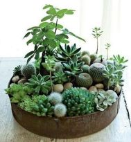 Beautiful Home Plant for Indoor Decorations 4