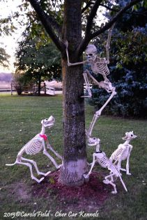 Halloween Decoration Ideas 76