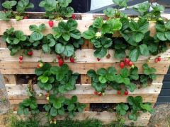 Amazing Creative Wood Pallet Garden Project 37