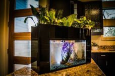 DIY Indoor Aquaponics Fish Tank Ideas 12