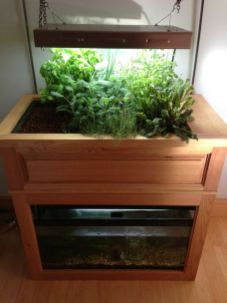 DIY Indoor Aquaponics Fish Tank Ideas 25
