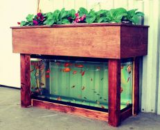 DIY Indoor Aquaponics Fish Tank Ideas 3