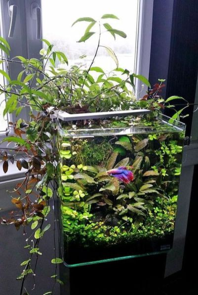 DIY Indoor Aquaponics Fish Tank Ideas 4
