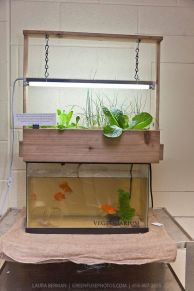 DIY Indoor Aquaponics Fish Tank Ideas 43