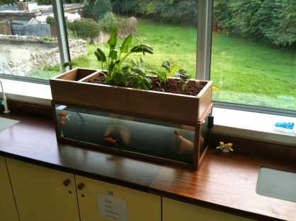 DIY Indoor Aquaponics Fish Tank Ideas 45
