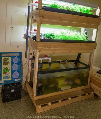 DIY Indoor Aquaponics Fish Tank Ideas 46
