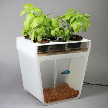 DIY Indoor Aquaponics Fish Tank Ideas 48