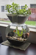 DIY Indoor Aquaponics Fish Tank Ideas 54