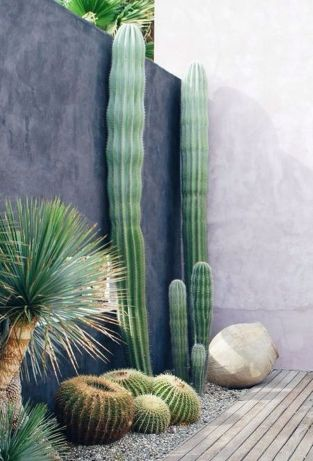 Stunning desert garden ideas for home yard 19