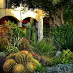 Stunning desert garden ideas for home yard 25