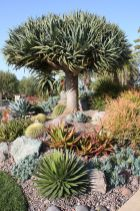 Stunning desert garden ideas for home yard 27