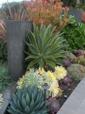 Stunning desert garden ideas for home yard 54